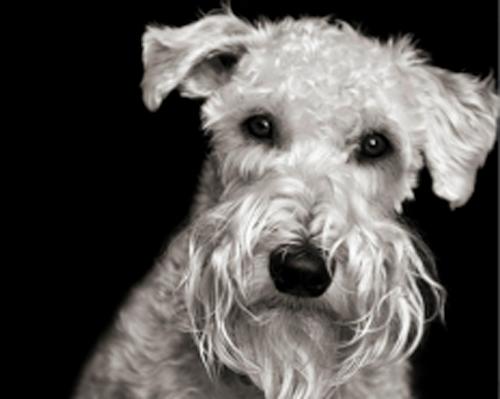 Jerrys dog black and white